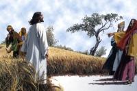 IX Niedziela zwykła